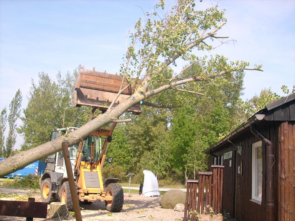 Beräumen der umgestürzten Bäume