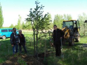 Mammutbaum steht am neuen Standort 21.04.2009