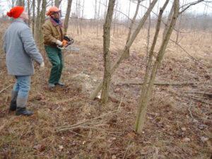Pflegearbeiten Forst